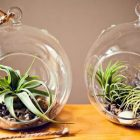 buy terrarium singapore